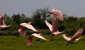 Uruguay, el país de los pájaros pintados despierta la pasión…