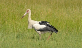 Birdwatching: Uruguay un destino de alto vuelo