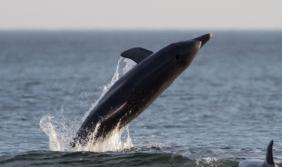 Una guía para disfrutar de los delfines y ballenas en…