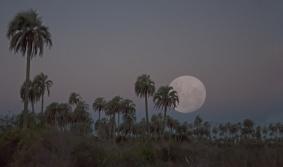 Luna Llena en el Palmar