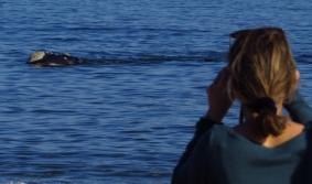 Contemplar a las ballenas en la costa rochense