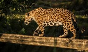 Visitar el nuevo Bioparque de Durazno