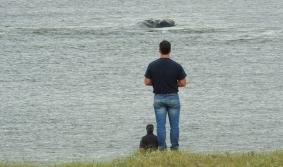 ¡Veo veo... una ballena!
