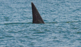 La ruta de las ballenas