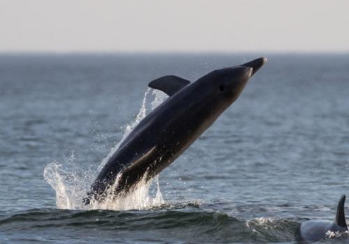Una guía para disfrutar de los delfines y ballenas en costas uruguayas