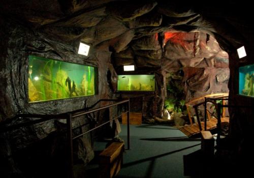 Una gruta de peces autóctonos en la ciudad