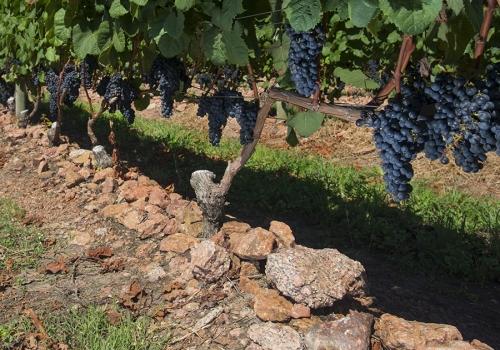 Visita a establecimientos rurales y viñedos
