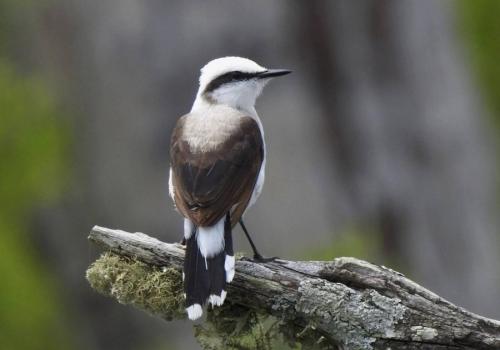 """Uruguay, un """"hot spot"""" para los fanáticos de las aves"""