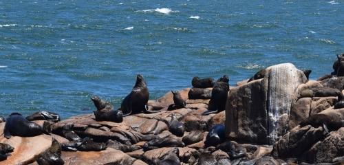 Cabo Polonio, surfing en compañía de lobos marinos