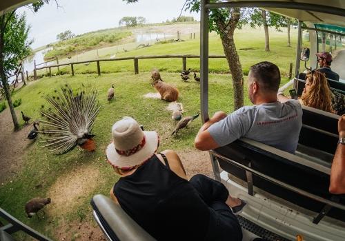Safari entre animales y vida campestre