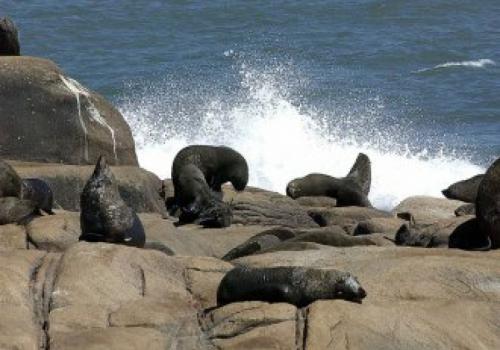 Una cita con los  lobos marinos